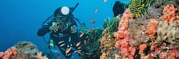 diving-750×250