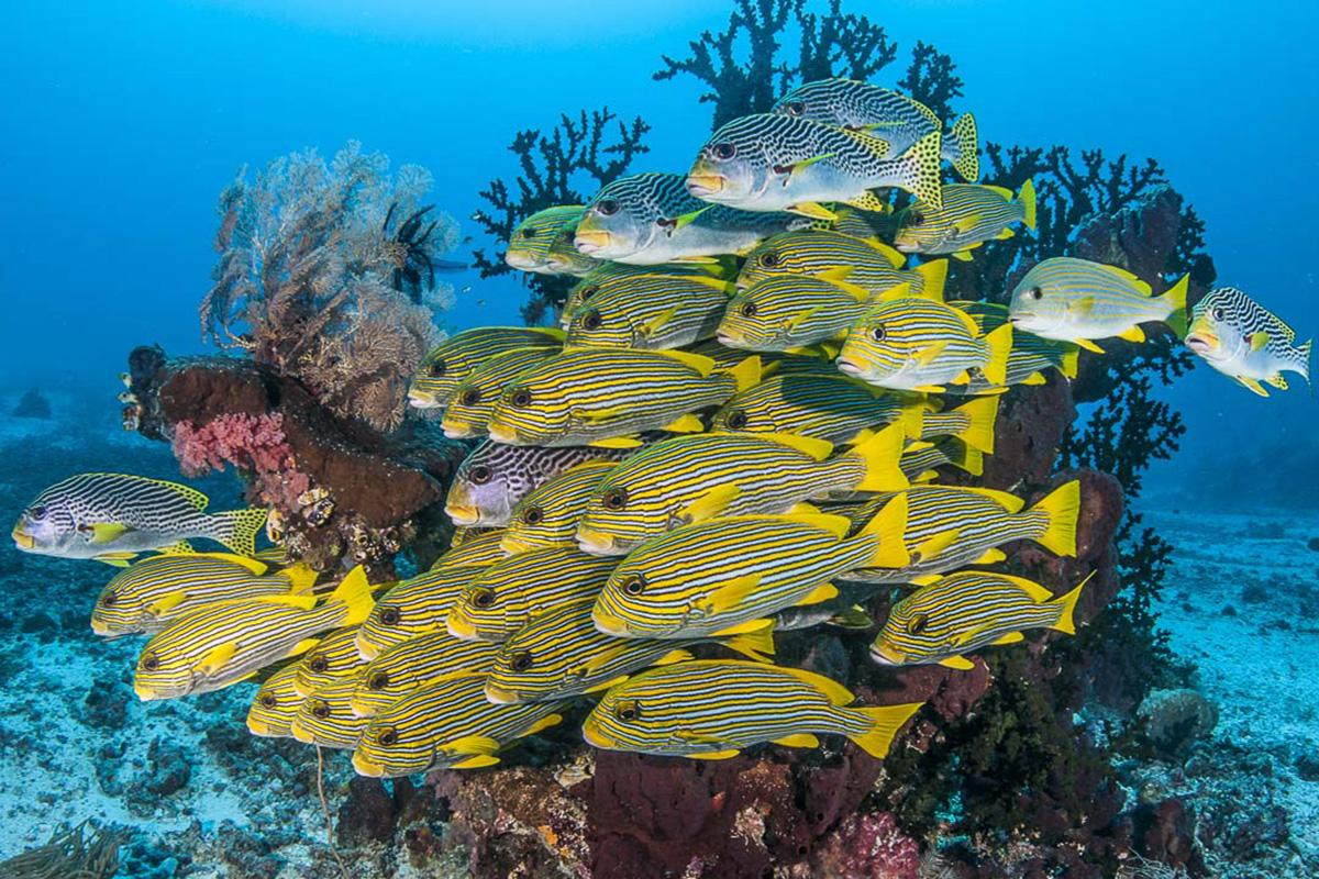 Diving in Candidasa: Gili Mimpang, Tepekong and Biaha