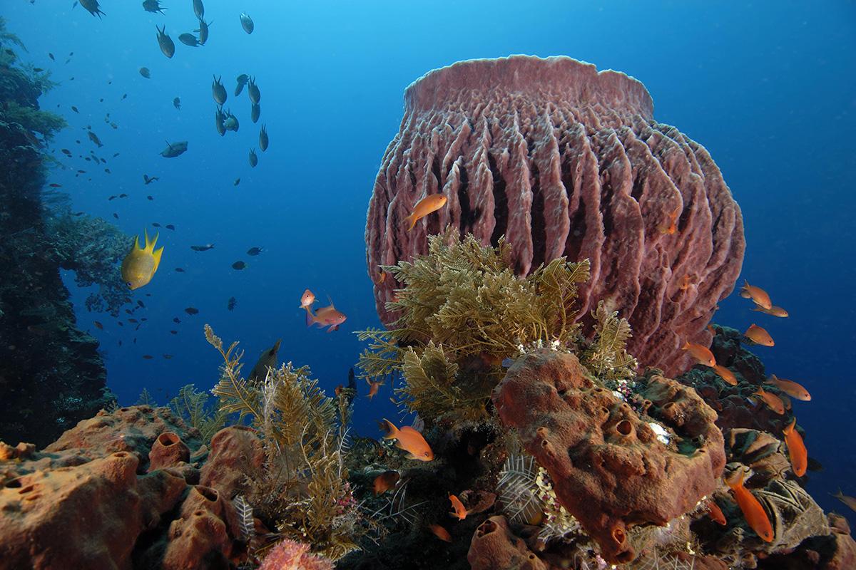 Diving Nusa Penida Marine Protected Area