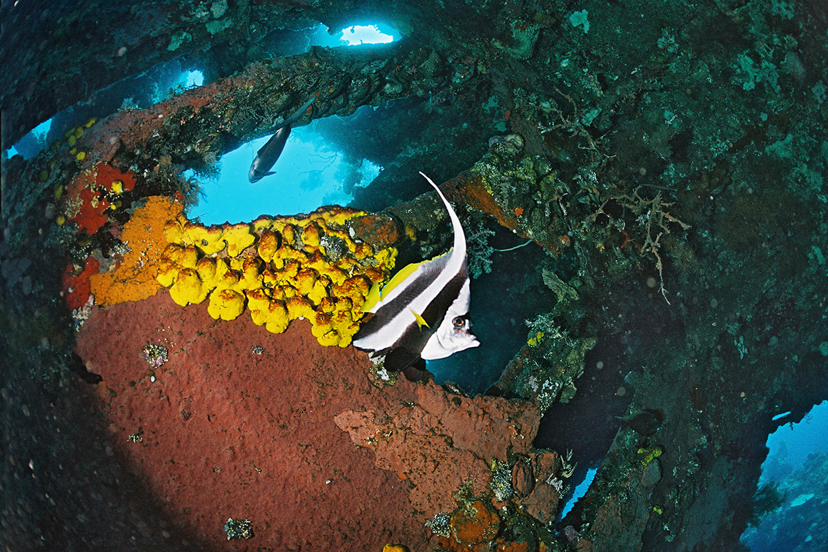 Diving the USS Liberty Shipwreck in Tulamben, Bali