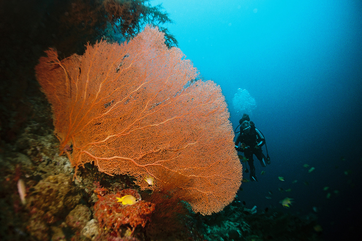 Eco-Friendly Scuba Diving Tips for Your Trip to Bali
