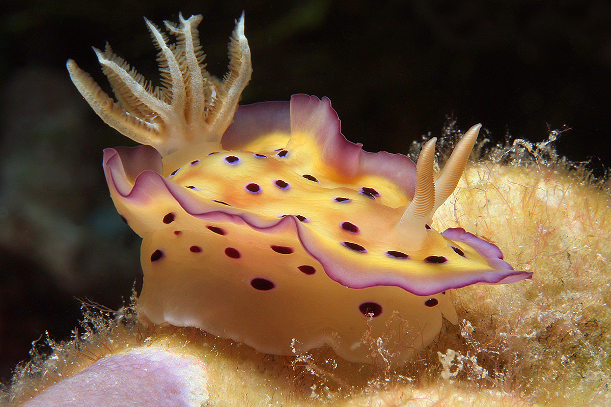 15 Incredible Sea Critters to See While Diving in Indonesia