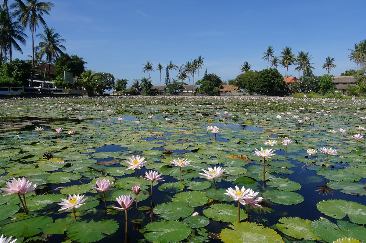 Lotus Lagoon Candidasa - Spots You Don't Want to Miss in East Bali
