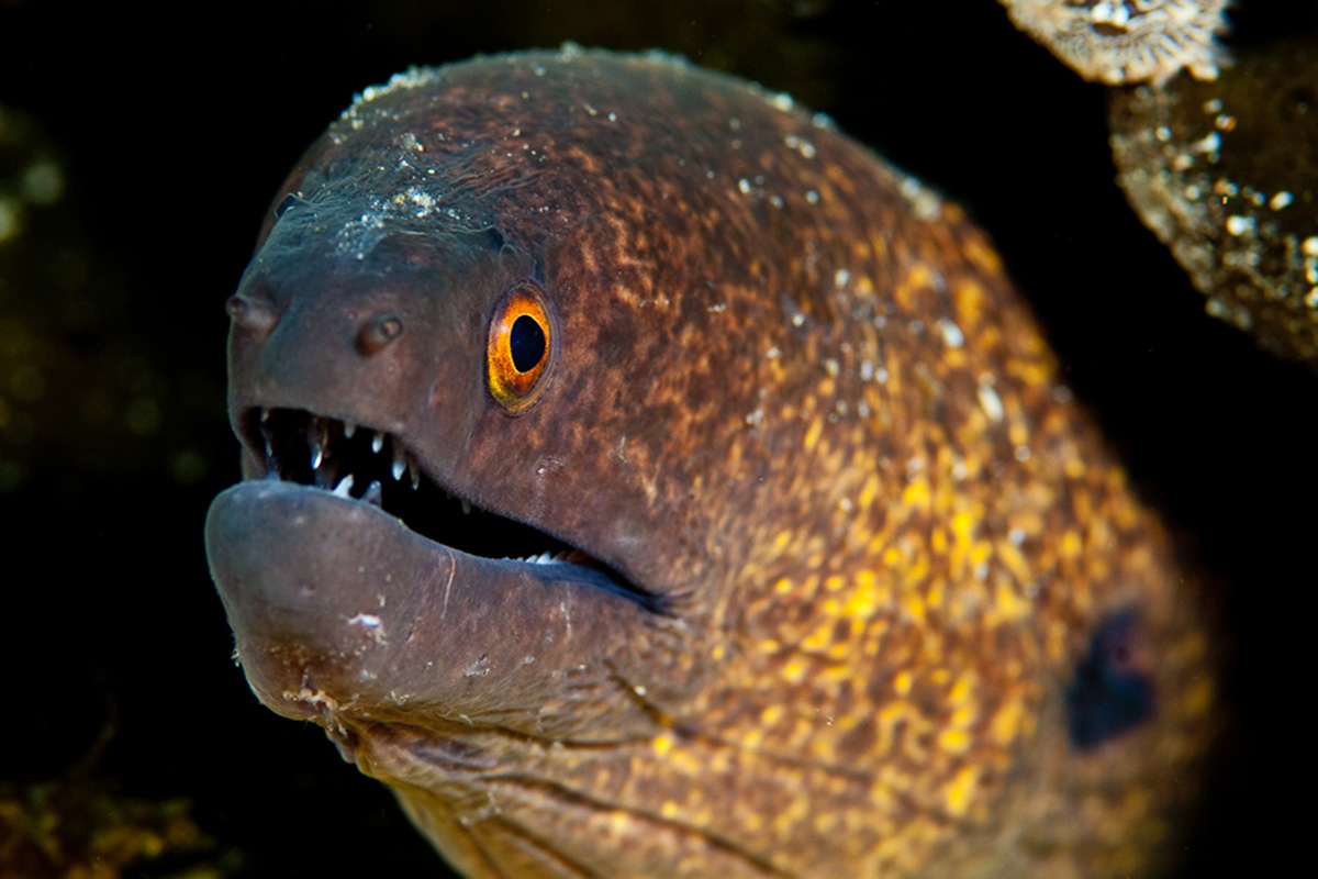 Moray Eel - 5 Dive Sites to Explore in Amuk Bay, Bali