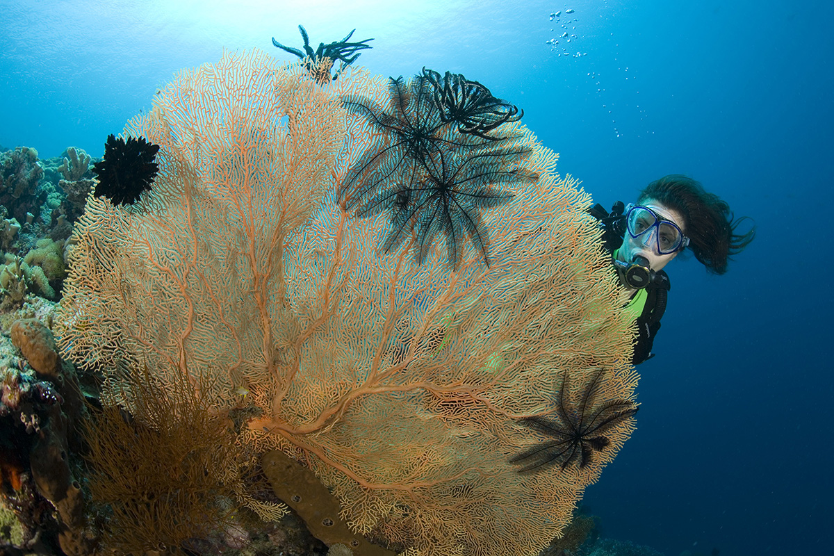 Which PADI Dive Course is for You?