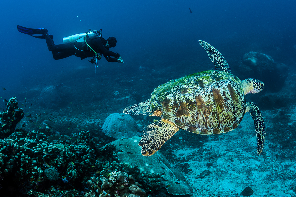 The Top 8 Health Benefits of Scuba Diving