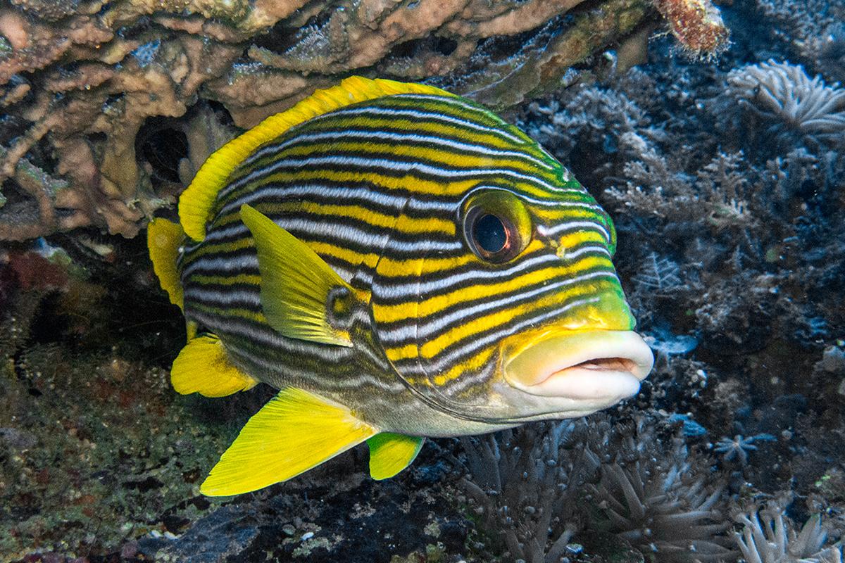 6 Interesting Reef Fish You'll See Around Candidasa, Bali