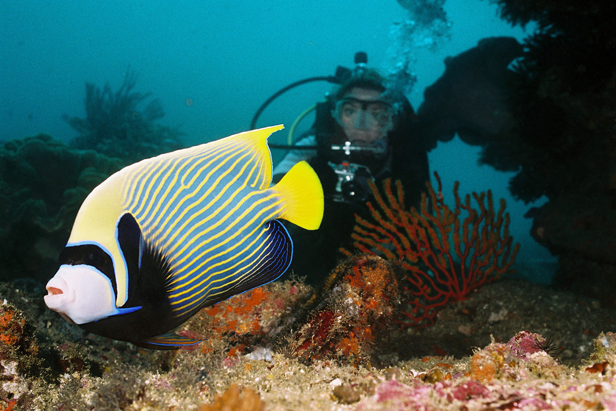 7 Essential Scuba Diving Tips for Beginners