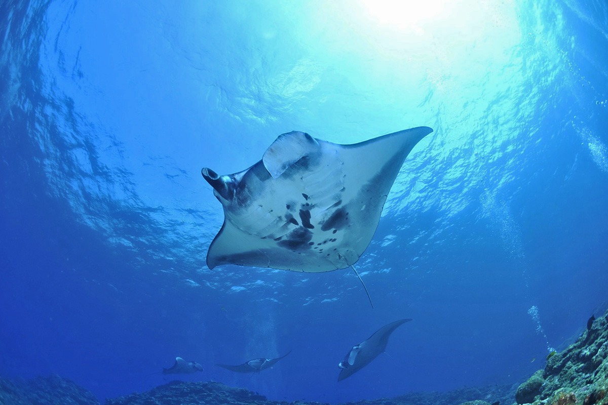 Diving Manta Point, Nusa Penida